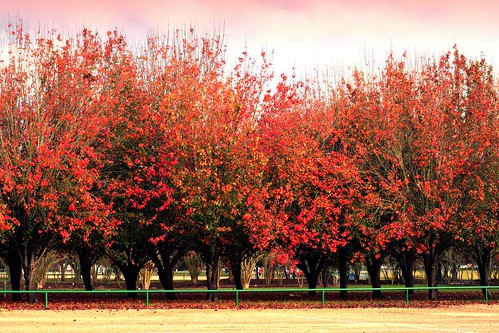 autumn red orange green nature leaves lines manipulated catchycolors landscape parkinglot seasons explore batonrouge urbannature bradfordpear mrgreenjeans gaylon gaylonkeeling