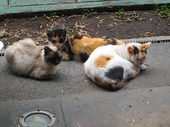 national palace stray cats | by goodiesfirst
