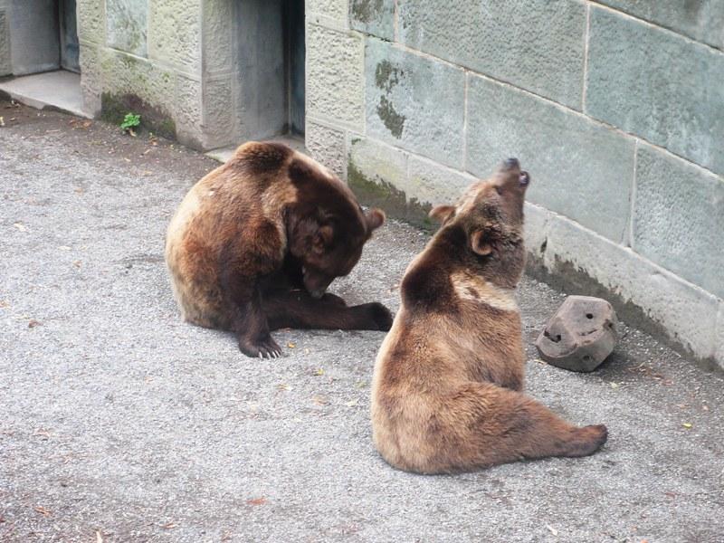 Bear Pit Bern