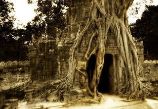 The Secret Cave, Enshrouded in Roots | by Trey Ratcliff
