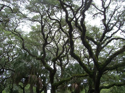 Trees at St. Augustine Lighthouse