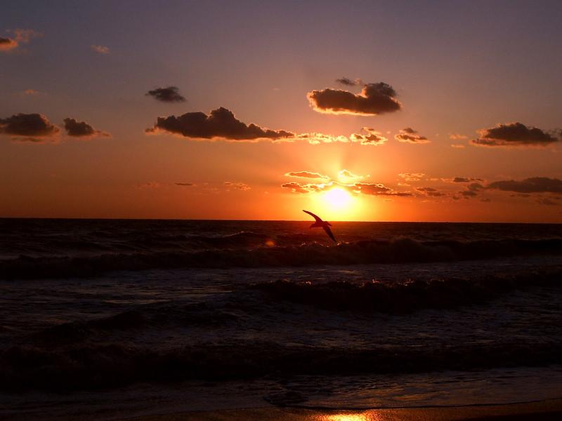 Gull in Sunrise