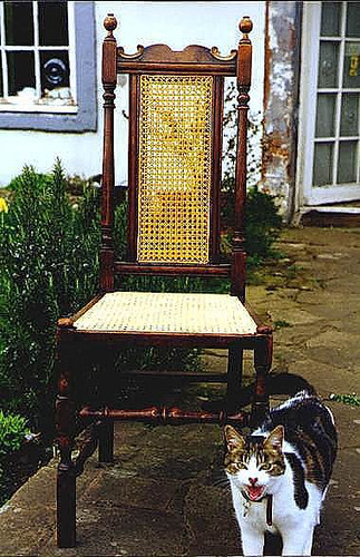 Antique cane seated chair with caned panel on back plus cat | by allybeag