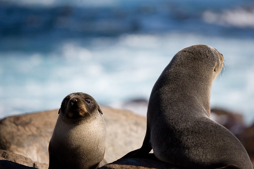seal pups_3 | by Mshai