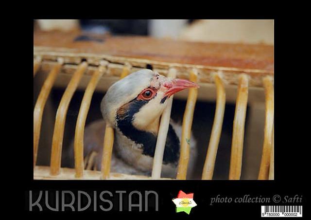 Çeper kurdistan