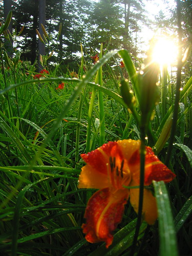 flowers sunset nature newhampshire