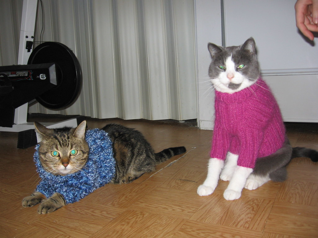 P \u0026 T Cat sweaters
