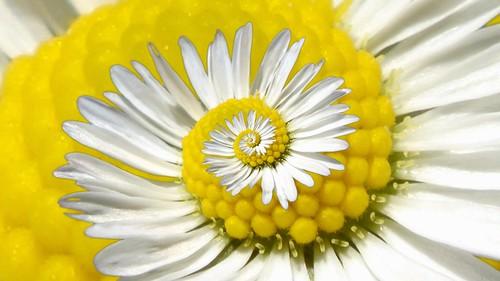 Recursive Daisy | by gadl