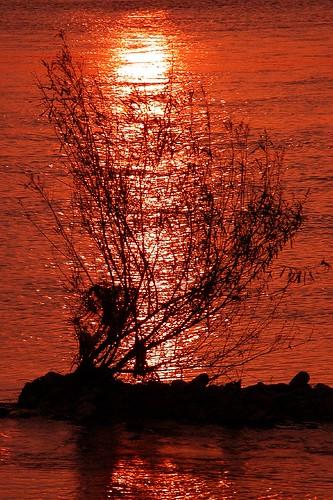 sunset nature japan river landscape geotagged pentax snap reflect toyama fx8 lumixfx8 eba 富山 eba317 神通川 jinzuriver geo:lat=366834378 geo:lon=1371979028 eba317theworldaccordingtome hirofumiebata
