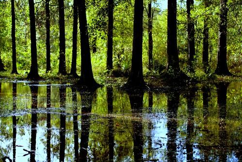 trees reflection nature wet water landscape ilovenature interestingness louisiana bravo quality explore backlit reflectionsof mybackyard mrgreenjeans gaylon gaylonkeeling