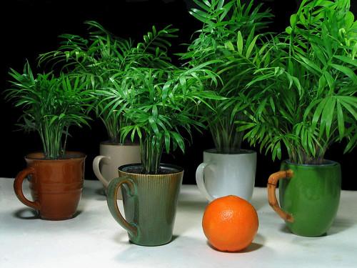 Mug a Palm