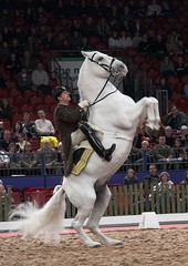 Spanish Riding School @ NEC   by BrianScottImages