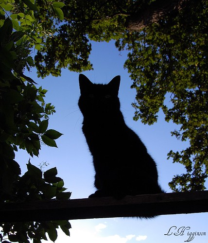 The Silhouette Cat | by HiggySTFC
