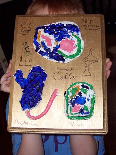 Bennys Cell Project Bacteria Cell Animal Cell Plant Cel