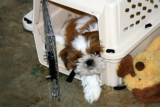 wonton in his crate   by jimw