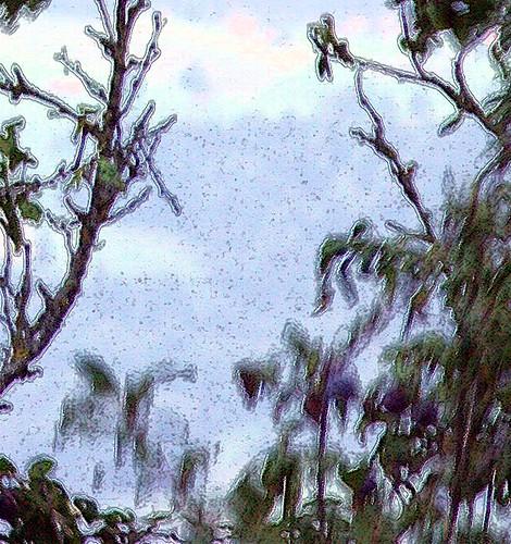 black bird berry tree at Thun Lake