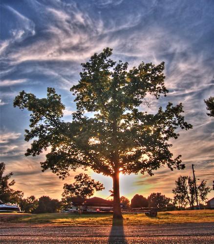sunset tree oklahoma hdr