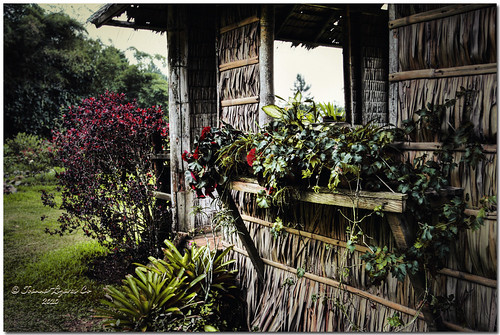 park trees plants house mountain nature grass playground garden philippines resort hut eden kubo davao balay bahay balai nipa davaocity