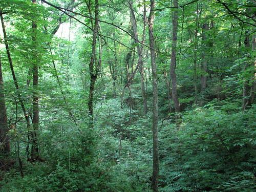 nature tn knoxville ijams