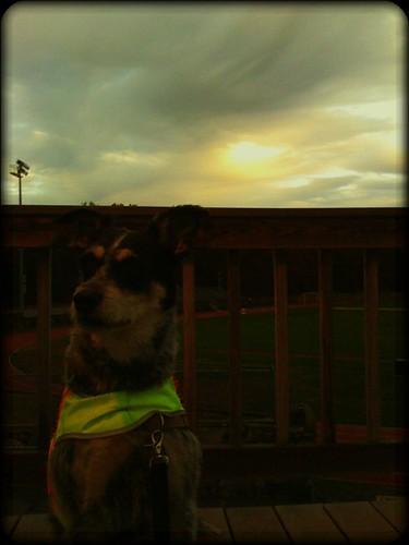 dog sun clouds sunrise ma skies newengland mornings norwood