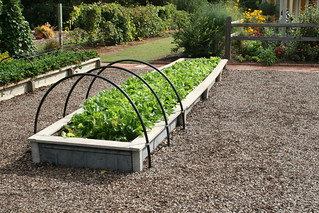 Lettuce in raised beds with hoops | by Gardening Solutions