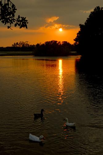 lake water pond texas ducks d200 susnset tomball hooksairport