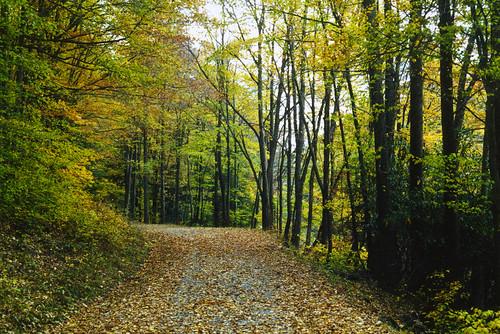 road autumn trees fall leaves walk dirt cranberry wv westvirginia wilderness rodlewis