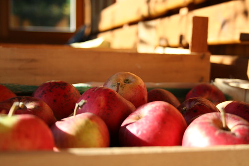 basket of apples | by mathias-erhart