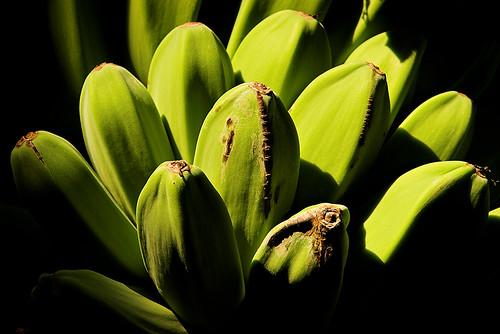 green fruit sunrise garden hand banana 30278