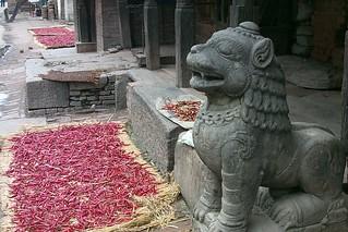 Chillies put out to dry, Kathmandu, Nepal