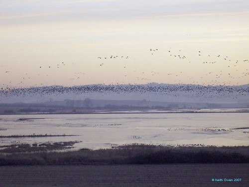 geese valley willamette wildliferefuge basketslough