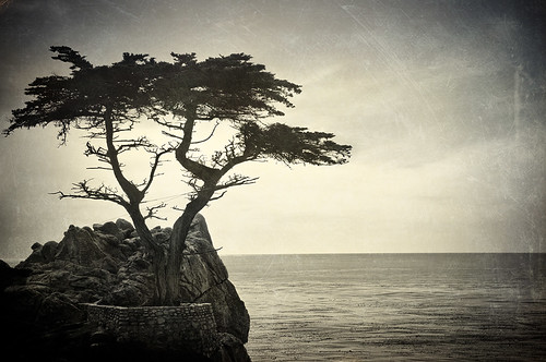 the lone cypress | by Eric C Bryan