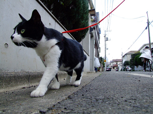 tokyo cat 03 | by chiejersey