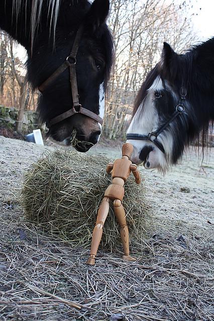 Fodrar / Feed the horses