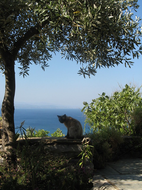 Cat on the terrace