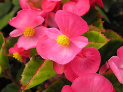 Flores Francia 114