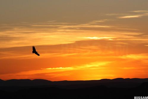 sunset sky bird silhouette canon landscape geotagged mexico atardecer rebel cloudy action paisaje hills ave cielo zacatecas silueta cerros xsi accion nuboso 450d abigfave platinumphoto ltytr1 overtheexcellence