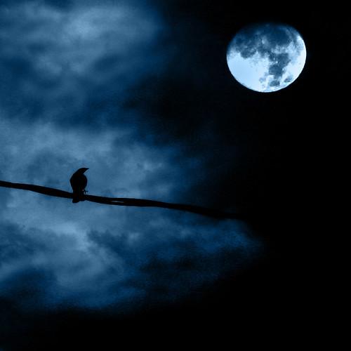 Noche de luna llena - Full moon night