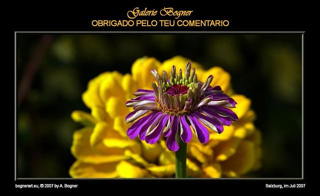 2007-07 OBRIGADO PELO TEU COMENTARIO 001
