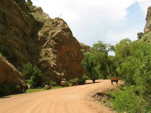 colorado mammals phantomcanyon