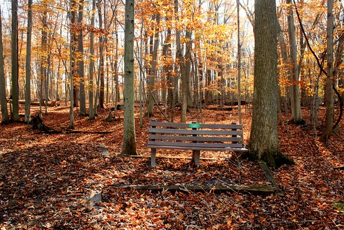 ny leaves bench memorial upstate rochester novemberlight tinkerpark mamalucy platinumpeaceaward