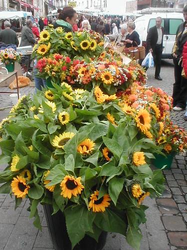 Sunflowers! | by Rhian de Kerhiec