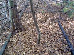 Abandoned Line