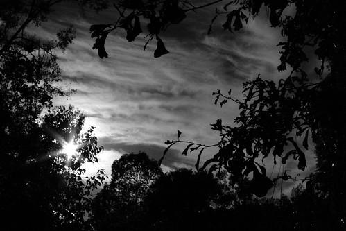 trees sunset sky blackandwhite bw nature clouds contrast landscape ilovenature louisiana backlit thesouth mrgreenjeans gaylon gaylonkeeling