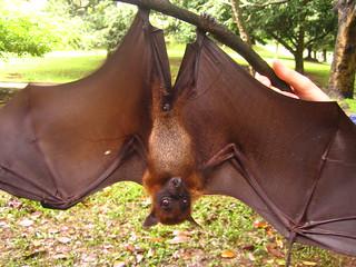 Bat   by Aidan Jones