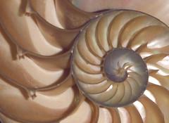 Shell:  Original (1 of 3) | by cobalt123