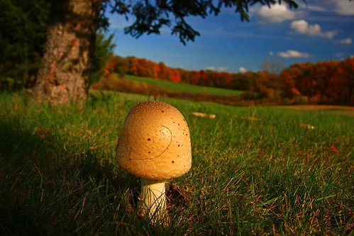 autumn fall mushroom sunshine foliage fungus prettyautumnbokeh