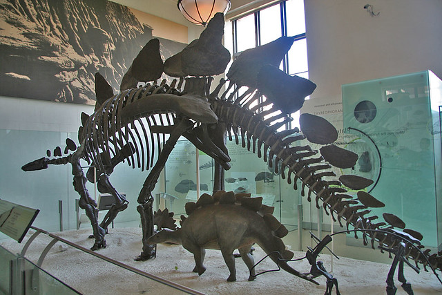 Thatched Stegosauruses Omniglot Blog