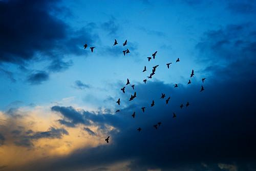 morning clouds pigeon formation carpinteria sunrize