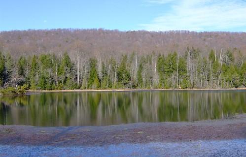 lake outdoors view tn turtle tennessee wildlife hike deer bobcat racoon overlook wolves baysmountain kingsport